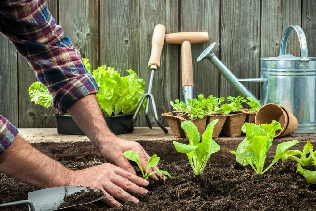Planting a garden makes obtaining fresh produce and ingredients easier than ever.